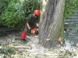 Kosten boom verwijderen