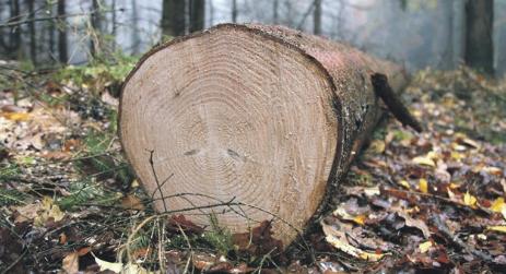 boom-laten-kappen