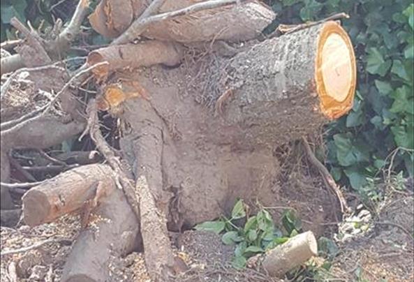 stronk-boom-weghalen